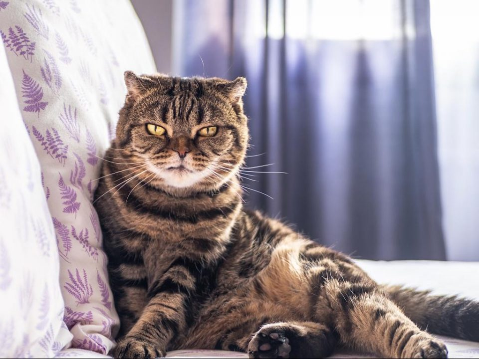 Cats' history – how feral cats were domesticated